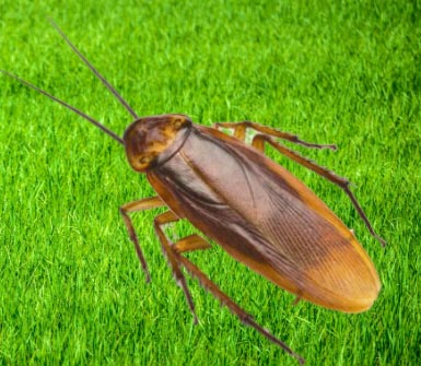 cockroaches in Edmonton